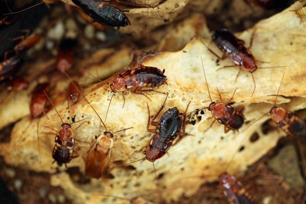 cockroaches_web